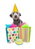 Presentes y torta del perro de la fiesta de cumpleaños Imágenes de archivo libres de regalías