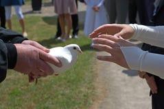 Presenti la colomba di cerimonia nuziale Fotografia Stock