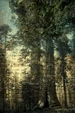 Preservation. Giant redwood trees photo based illustration with overlay of cursive writing and texture Stock Photo