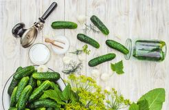 Preservation of fresh house cucumbers. Selective focus stock images