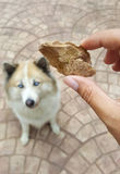 Preserved chicken liver snack food on human hand. With beautiful dog background Royalty Free Stock Images