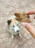 Preserved chicken liver snack food on human hand. With beautiful dog background Royalty Free Stock Photo