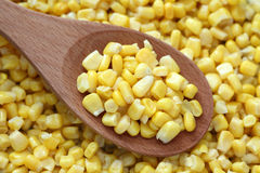 Preserved corn in a wooden spoon. On preserved corn background. Close-up Stock Images