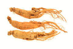Preserved Ginseng Roots Stock Photos