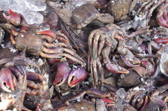 Preserved salty crabs in seafood market. Stock Photo