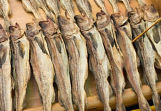 Preserved salty fish Stock Images