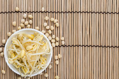 Preserved Soy Sprouts Stock Photography