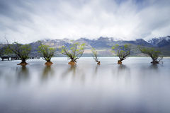 Preserving Nature. Trees, lake and mountains in New Zealand stock photography