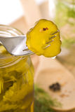 Preserving pickles with dill and peppercorns Royalty Free Stock Image