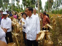President Jokowi Royalty Free Stock Image