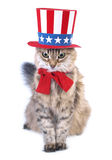Presidents day cat Royalty Free Stock Image