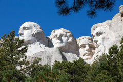 Presidents on Mount Rushmore framed by trees. View up to the four Presidents faces - Lincoln, Roosevelt, Jefferson and Washington - sculpted into the granite stock photography