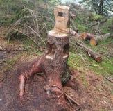 Presidenza di legno Immagini Stock Libere da Diritti
