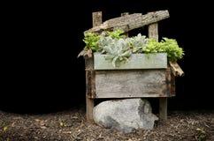 Presidenza di legno con le piante Fotografie Stock Libere da Diritti