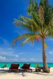 Presidenze di spiaggia sotto una palma Fotografia Stock