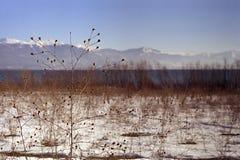 prespa озера Стоковые Фотографии RF