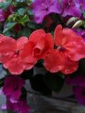 Presque fleuri photo stock