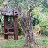 Press. Antique olive press and an old olive tree in the garden Royalty Free Stock Photos