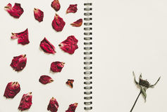 Press dried rose flower petals, on note book page, with copy space, vintage tone Royalty Free Stock Photography