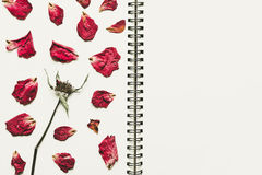 Press dried rose flower petals, on notebook page with copy space, vintage tone. Press dried rose flower petals, on notebook page with copy space stock photo