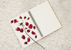 Press dried rose flower petals on notebook page, on white carpet fur Royalty Free Stock Image