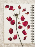 Press dried rose flower petals on notebook page, on white carpet fur Royalty Free Stock Images