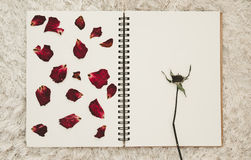 Press dried rose flower petals on photo album with copy space Stock Photos