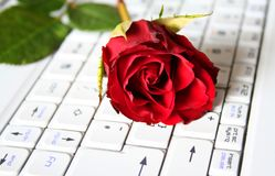 Press Enter for Love. Fresh Deep Red Rose layed across Keyboard royalty free stock photography