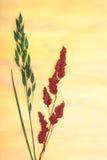 pressande abstrakt växter Arkivfoton