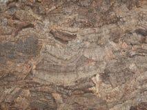 Pressande kork, naturlig råvara, textur Royaltyfria Foton