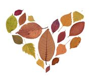 Pressande torkad Herbarium av Autumn Leaves av olika färger på vit bakgrund Royaltyfri Bild