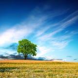 pressar naturen Fotografering för Bildbyråer