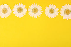 Pressed Daisies On Yellow Stock Photos