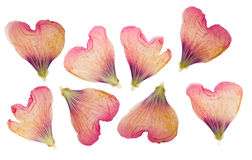 Pressed and dried delicate petals of flowers of mallow, isolated Royalty Free Stock Photos