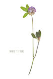 Pressed and dried flower royalty free stock image