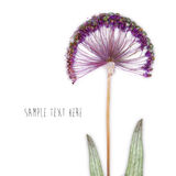 Pressed and dried flowers background Royalty Free Stock Photography
