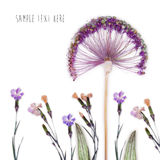 Pressed and dried flowers background Royalty Free Stock Image