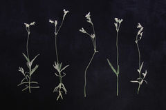 Pressed and dried flowers Stock Photo
