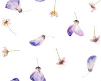 Pressed and dried flowers pattern Royalty Free Stock Photos