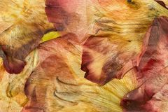 Pressed and dried flower gladiolus background Stock Images