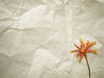 Pressed dry flower Royalty Free Stock Photography