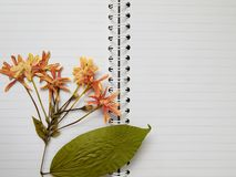 Pressed dry flower on two page note book Stock Photos