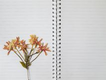 Pressed dry flower on two page note book Royalty Free Stock Photography