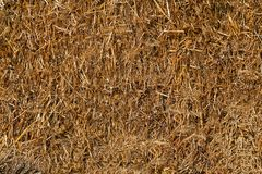 Pressed dry straw yellow .Texture or background. Dry straw yellow in color and compacted into bales .Texture or background royalty free stock images