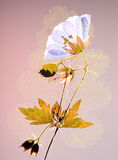 Pressed flower and leaf Stock Image