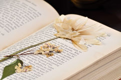 Pressed Flower in Old Book Stock Images
