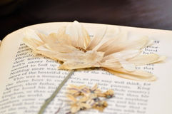 Pressed Flower in Old Book Stock Image