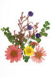 Pressed flowers Royalty Free Stock Photo