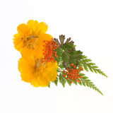 Pressed flowers II. Pressed flowers and leaves arrangement - shades of yellow and orange stock photos