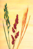 Pressed grasses Stock Image